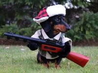 «Я — идеальный охотник» и другие костюмы для собак