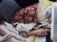 23 кошки, которые хотят к тебе прижаться во время работы!