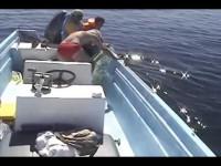Они спасли умирающего кита. Посмотрите, что он сделал в знак благодарности!