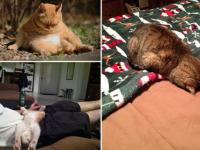 Котики, которые постигли истинное искусство «Sleep-Fu»