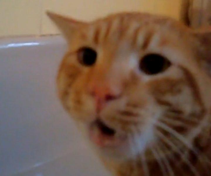 Если кот не хочет мыться — он способен на многое. Но такого хозяева явно не ожидали.