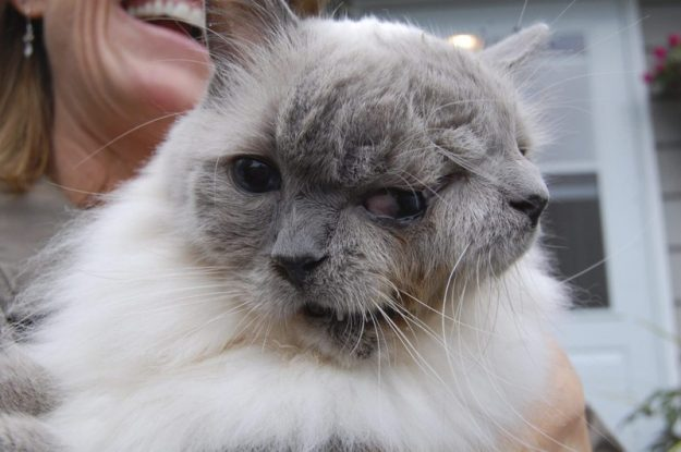 Handout image of cat with two faces for CAT/TWOFACE