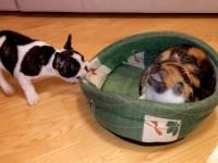 """Щенок пытается """"отвоевать"""" свое место у невозмутимого кота"""