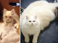 Котенок, найденный на дороге, оказался невероятно пушистым