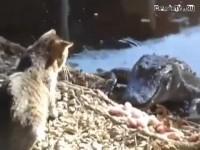 Кот и крокодил. Кто кого? Конечно же к…