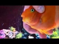 Эта рыбка ежедневно с нетерпением ожидает хозяев. Догадайтесь зачем