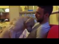 Очень печальная собака просит прощения