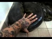 Слабоумие и отвага. Бразилец чуть не лишился жизни, решив потрогать анаконду, которая заползла в его дом