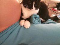 Кошка не слезала с живота беременной девушки. Но самое интересное произошло после родов…