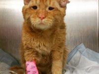 Это был самый грустный кот в приюте. Но как он изменился, когда обрел новый дом!