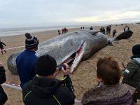 Вскрыв желудок мертвого кита, глазам ученых открылась леденящая сердце картина