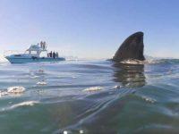 Жажда крови: 15 жестоких нападений акул, снятых на камеру