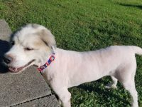 Они вытащили из грязи невероятно заросшего пса, срезали с него 16 кг шерсти и теперь просто глаз не могут отвести