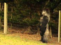 Многие приезжают сюда только чтобы увидеть эту гориллу. Когда посмотришь на нее, все становится понятно