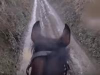 Вот почему не стоит отправляться на прогулку верхом на скаковой лошади