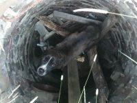 Пара друзей наткнулась на канализационный люк, в котором медленно умирал пес