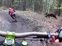 Камера на шлеме записала погоню медведя за байкерами по горному склону