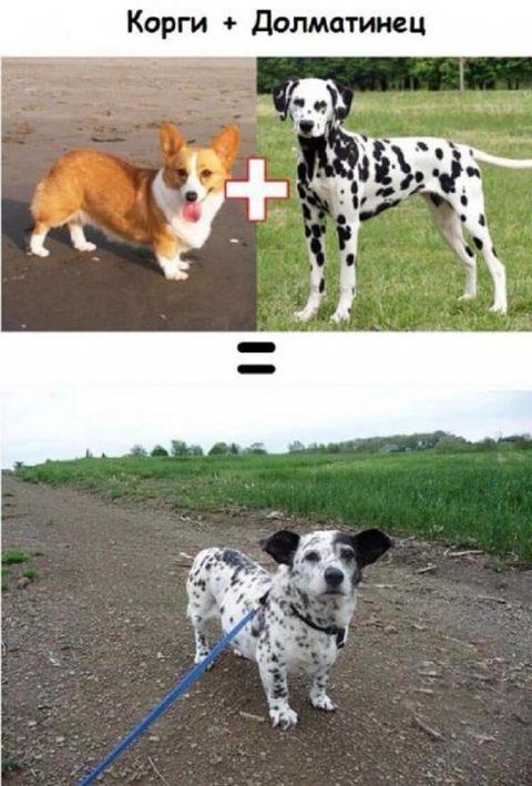 Последствия взаимной любви собак разных пород
