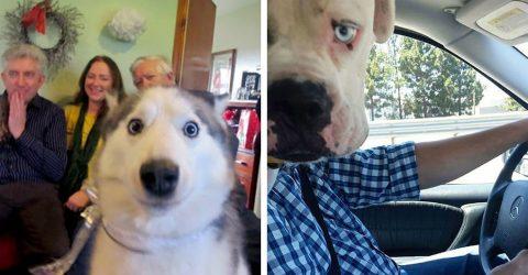 23 уморительных снимка, где собака – главный герой