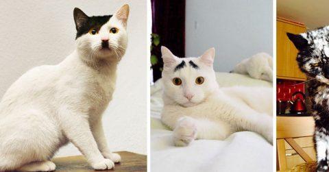 20 кошек с удивительным окрасом