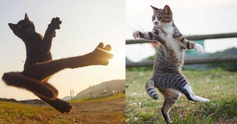 Японский фотограф снимает кошек-ниндзя. Очень забавно!