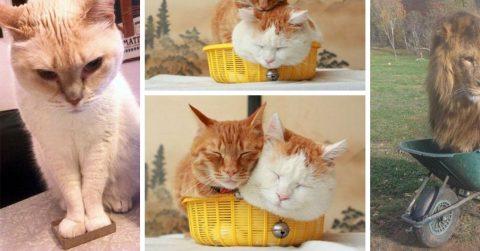20 кошек, которым ну очень нужно поместиться