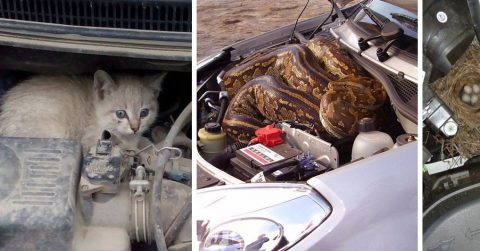С наступлением холодного времени года автомобилистам все чаще приходится заглядывать под капот. И не зря…