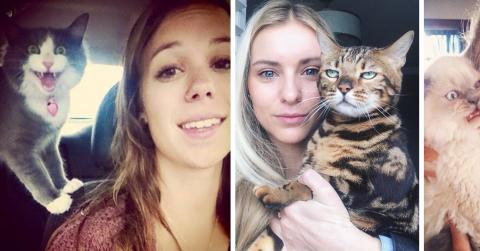 20 кошек, которые ненавидят делать селфи