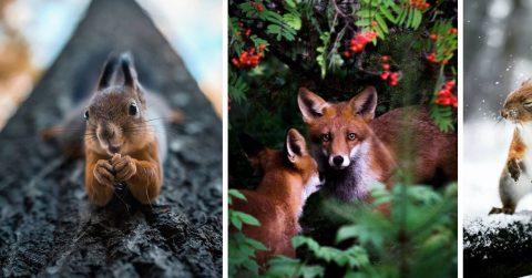 Фотограф снимает животных так, что глаз не оторвать от фото!