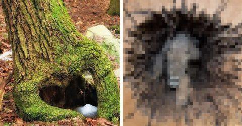 Жуткая находка: в спиленном дереве нашли мумию охотничьей собаки