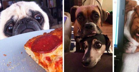 20 милейших собак, которые способны разжалобить одним только взглядом и выпросить все, что угодно