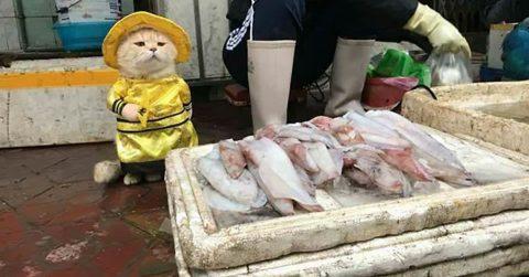 Во Вьетнаме кот продает рыбу и покоряет интернет своими фотографиями
