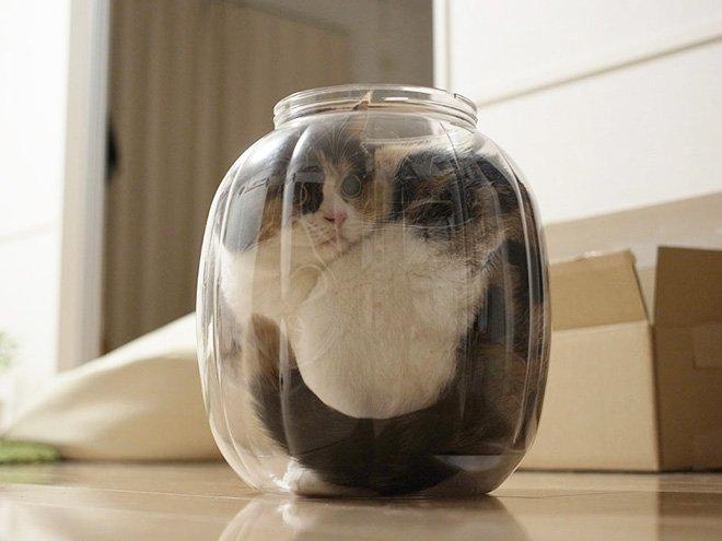 """20 неоспоримых доказательств того, что коты – это """"жидкость"""""""