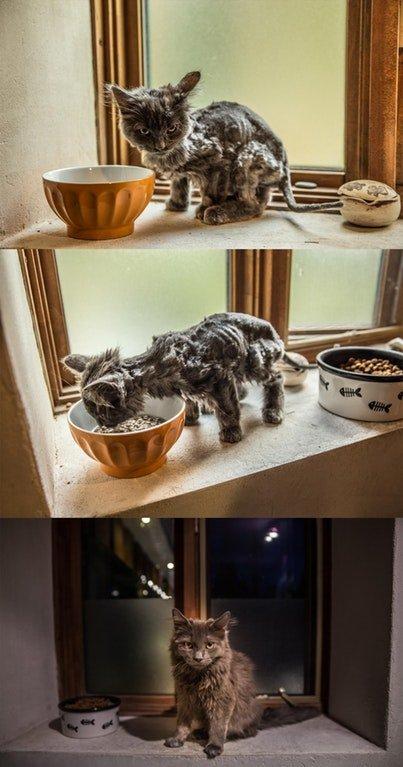 Жизнь до и после приюта: 17 животных, которые нашли себе дом