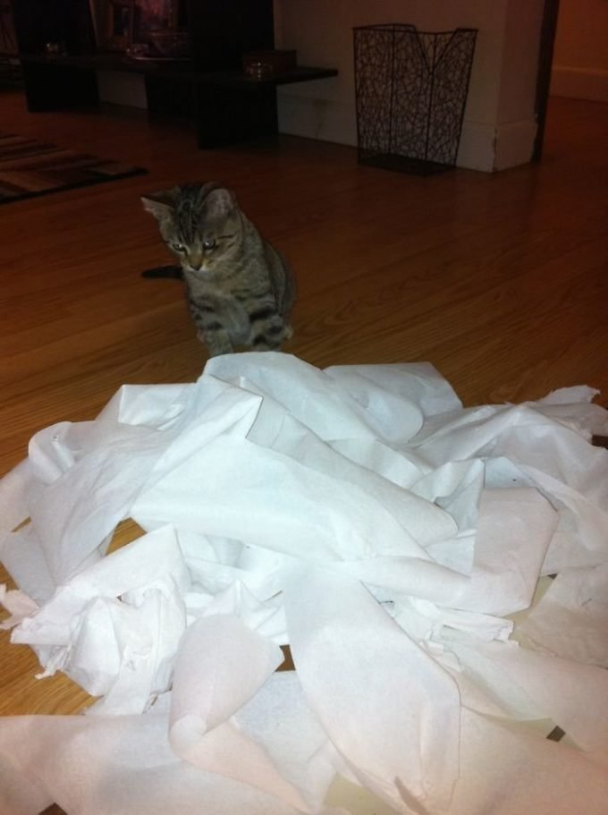 """""""Давай, заведи кота, весело же будет"""", говорили они. А вот что вышло на самом деле"""