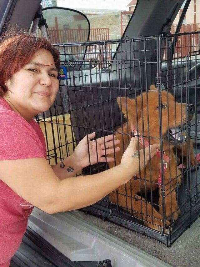 Когда мексиканка нашла под машиной лысого щенка, она решила его спасти. Вы не поверите, в какого красавца он превратился после лечения!