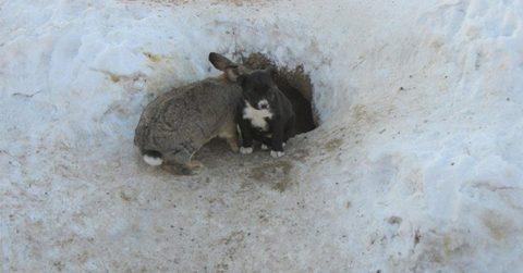 Сбежавший с фермы кролик спас бездомных щенков, заменив им убитую мать
