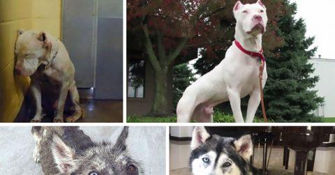 25 фото собак до и после того, как их нашли любящие хозяева