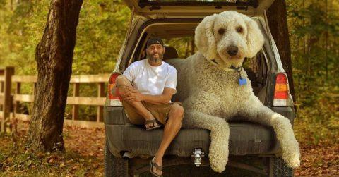 Мужчина любит фотографировать свою собаку. Обычное дело, но кое-что вас очень удивит