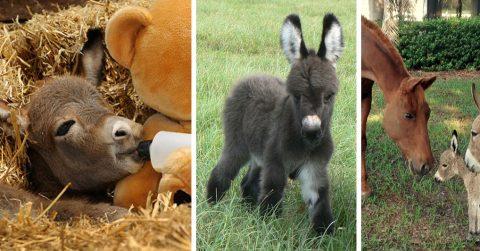 25 самых милых фотографий маленьких осликов. Это все, что вам надо увидеть сегодня