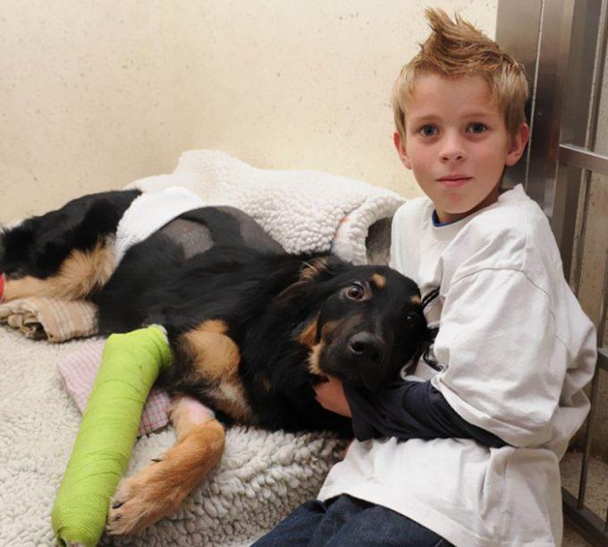 Собаки, которым впору давать медаль героя при жизни