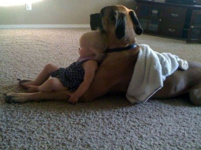 20 примеров безусловной любви собак, которые растопят ваше сердце