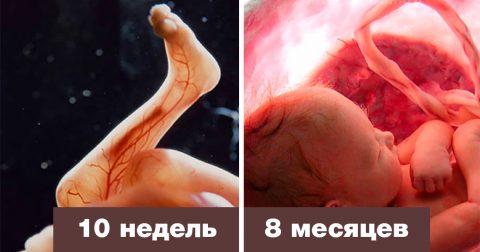 20 удивительных снимков о том, как протекает беременность изнутри материнской утробы