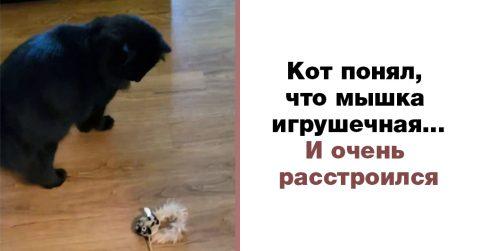 Реакция кота, который наконец-то поймал мышь на палочке, чтобы осознать: всю жизнь его обманывали